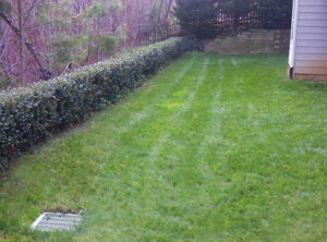 after lawn overseeding service