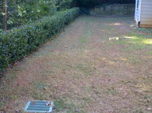 before lawn overseeding service